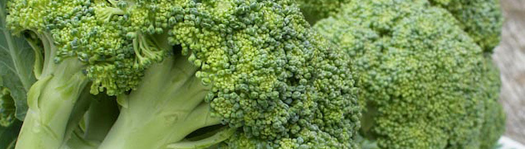 How to Grow Better Broccoli