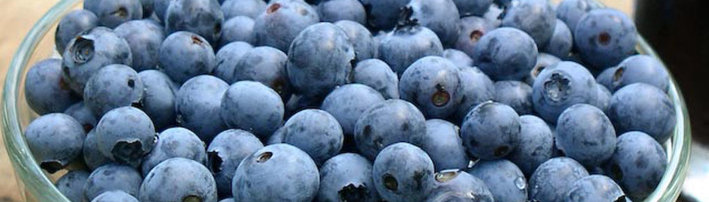 Why You Need Blueberries