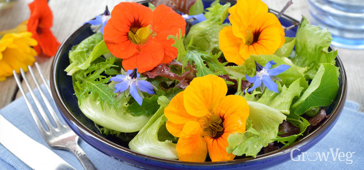 5 edible flowers to grow in your vegetable garden mightylinksfo