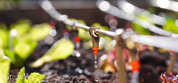 Planning Irrigation For Your Garden