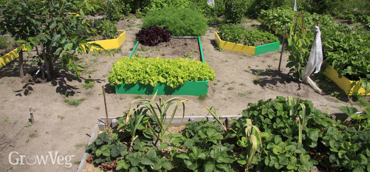 Raised beds can be used where dry, compacted soil is an issue