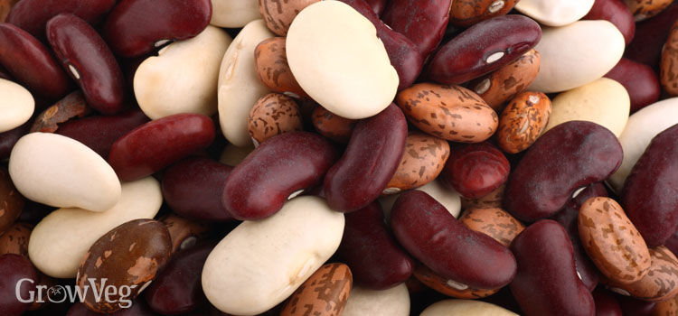 https://res.cloudinary.com/growinginteractive/image/upload/q_80/v1502361558/growblog/mixed-dry-beans-2x.jpg