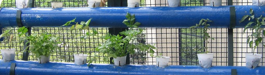 Weird or Wonderful? Growing Food in Unusual Places