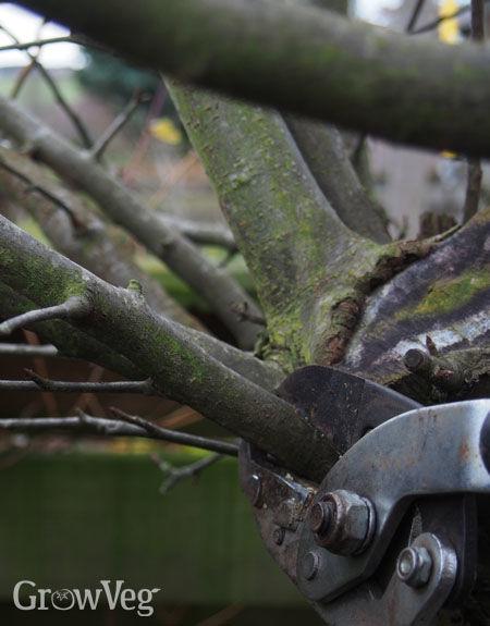 """""""Pruning"""