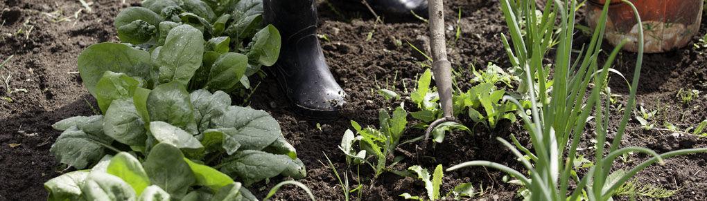 Easy Weeding for Vegetable Gardens