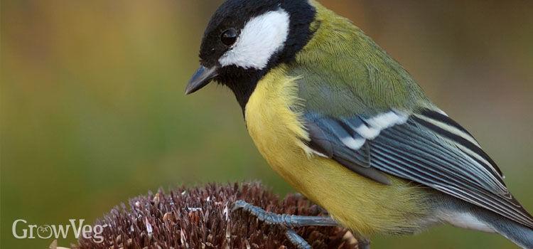 """""""Bird"""