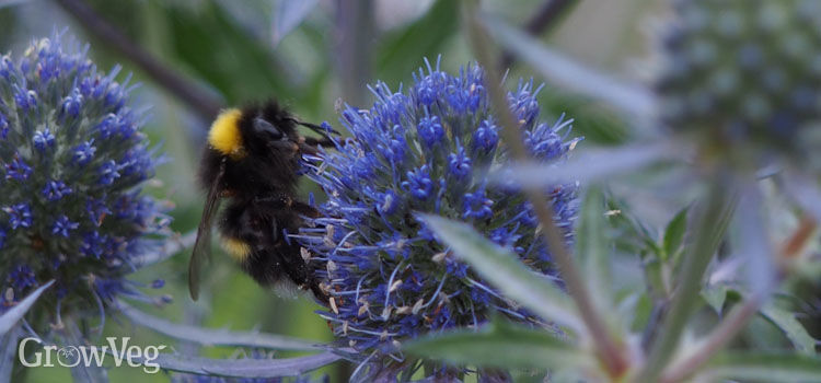 Bees and other pollinators love a garden full of flowers