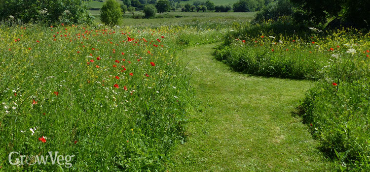Low-maintenance wildflower meadow with mown paths