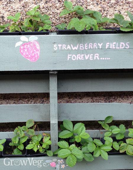 """Strawberry"