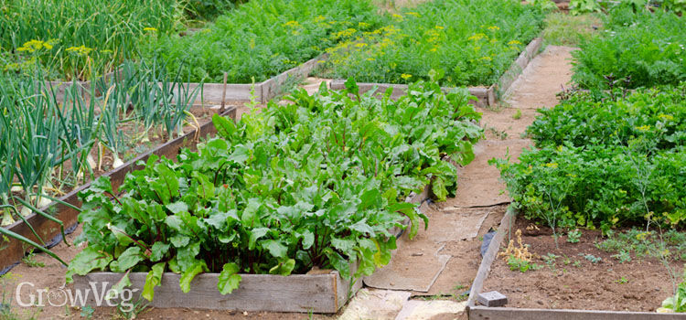https://res.cloudinary.com/growinginteractive/image/upload/q_80/v1523628946/growblog/raised-bed-vegetable-garden-2-2x.jpg