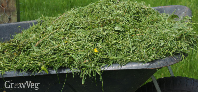 https://res.cloudinary.com/growinginteractive/image/upload/q_80/v1533720894/growblog/grass-clippings-for-mulching-2x.jpg