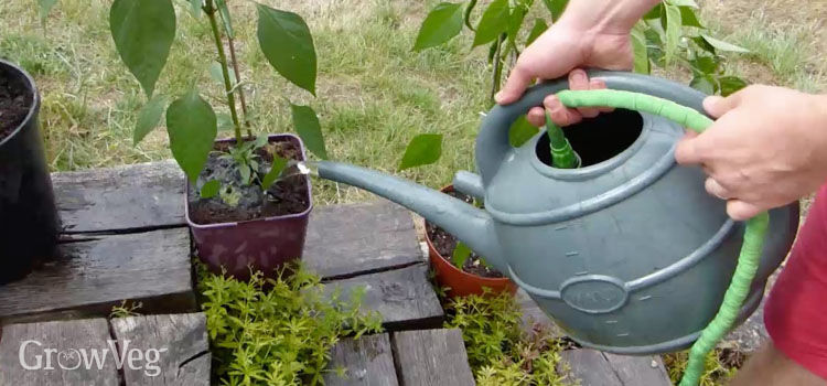 https://res.cloudinary.com/growinginteractive/image/upload/q_80/v1533742034/growblog/hose-in-watering-can-2x.jpg