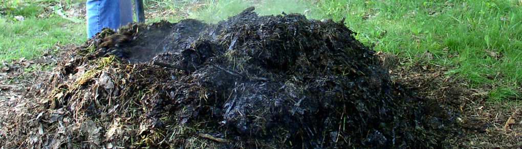 Using Animal Manure in the Vegetable Garden