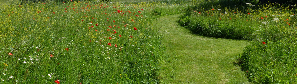 How to Plan a Low Maintenance Garden