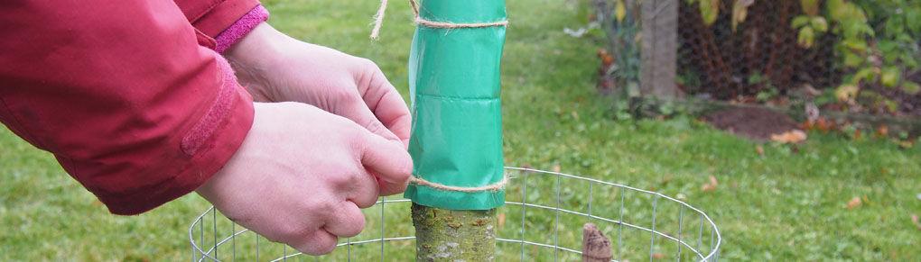 5 Organic Ways to Foil Fruit Tree Pests