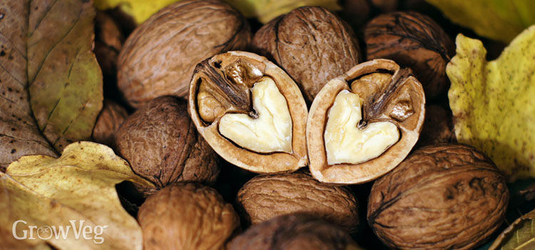 https://res.cloudinary.com/growinginteractive/image/upload/q_80/v1542234008/growblog/heart-shaped-walnuts-2x.jpg