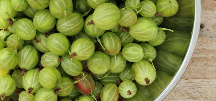 https://res.cloudinary.com/growinginteractive/image/upload/q_80/v1542925029/growblog/gooseberries-in-bowl-2x.jpg