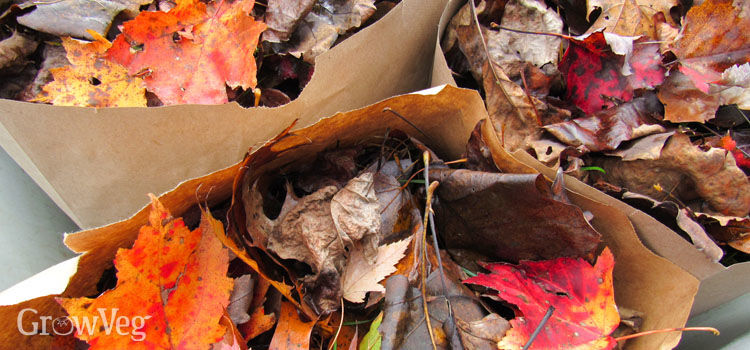 Fallen leaves stored in paper bags