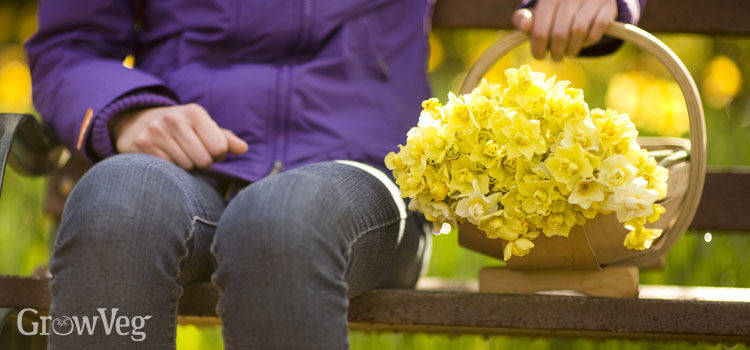 https://res.cloudinary.com/growinginteractive/image/upload/q_80/v1550159060/growblog/daffodils-in-trug-2x.jpg