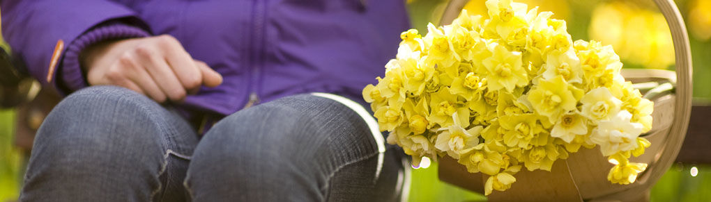 Bring on Spring With Durable, Dependable Daffodils