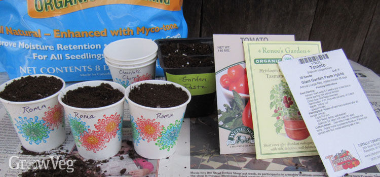 Sowing setup for starting tomatoes from seed
