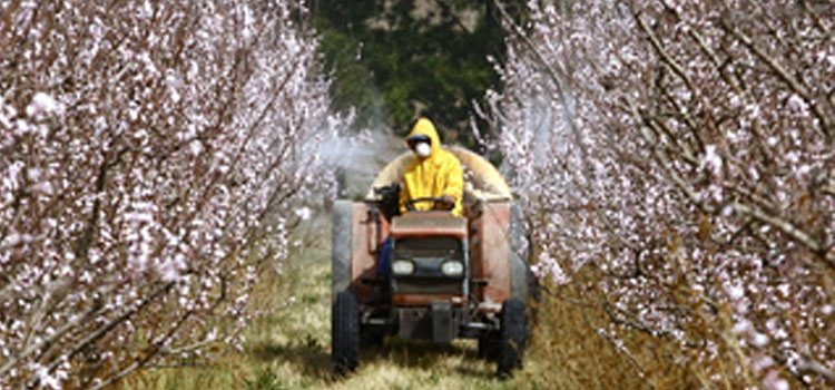 Spraying pesticides on fruit trees