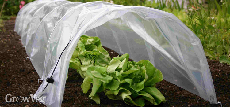 'Easy Polytunnel' used to protect vegetables against cold weather