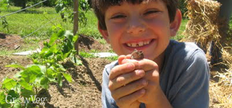Kid in the garden with a frog