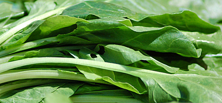 Spinach (Perpetual), also known as Leaf beet
