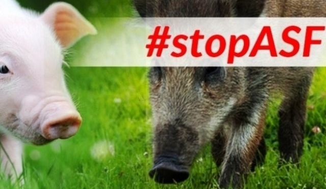 stop ASF!