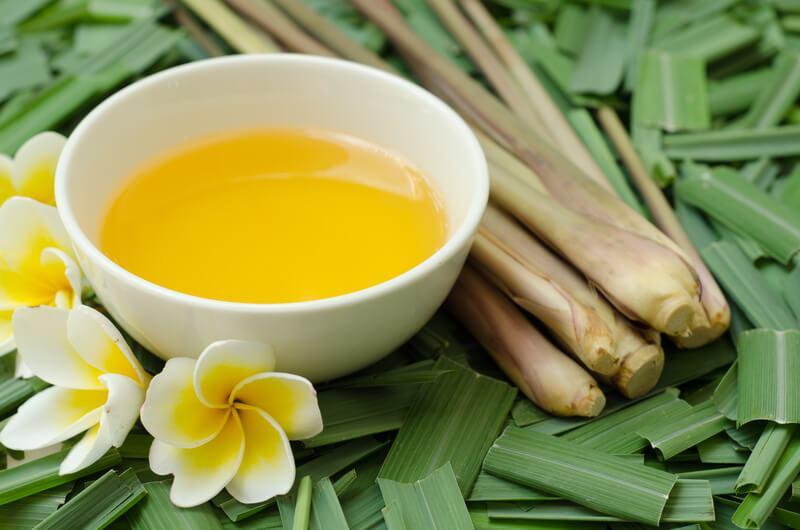 manfaat-citronella-oil Tips Praktis Mengusir Nyamuk Dari Rumah Family Health Life