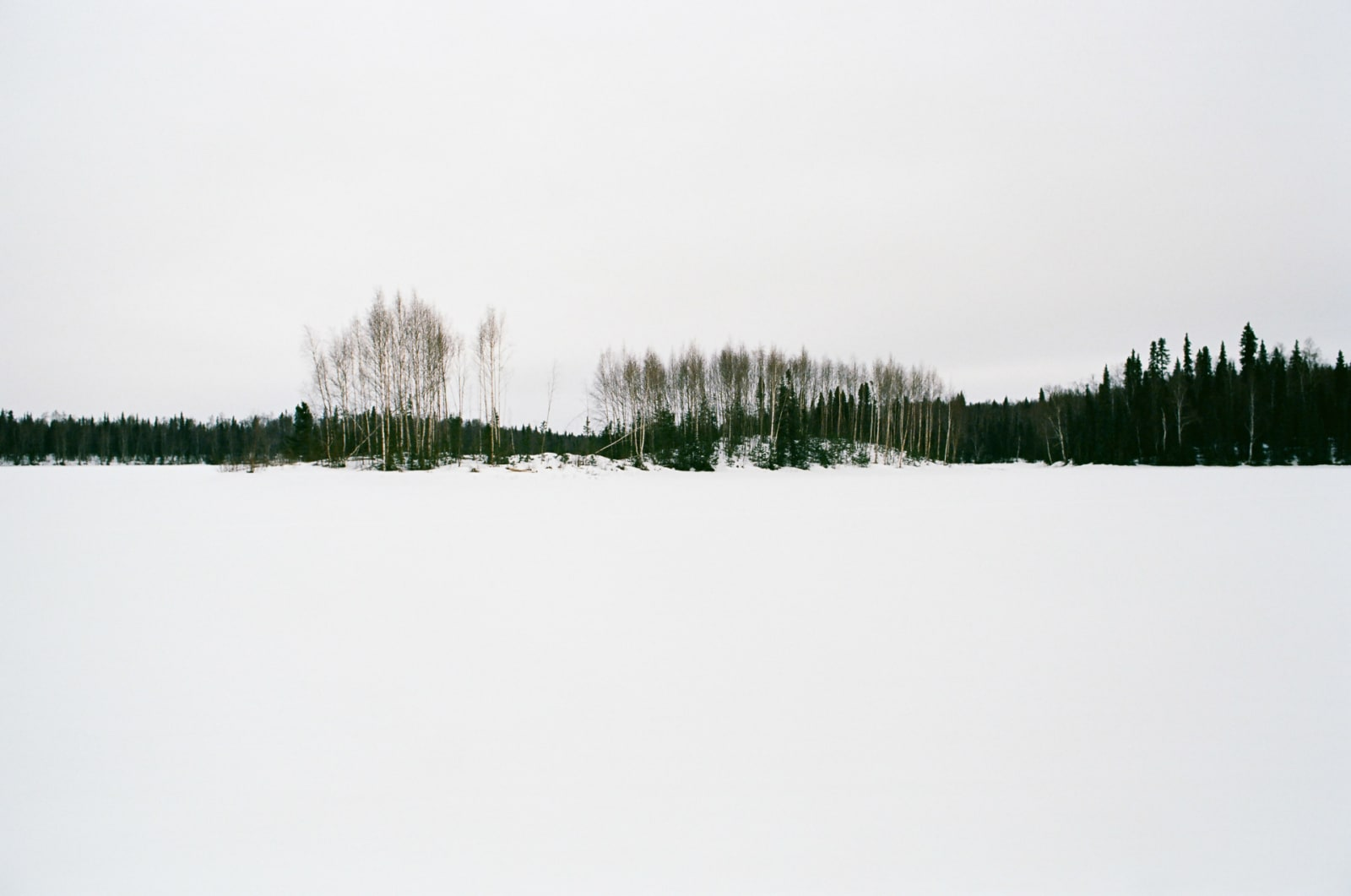 On a little trail in Talkeetna, AK. Did a little photoshop to make the sky and snow almost the same grey. March, 2014.