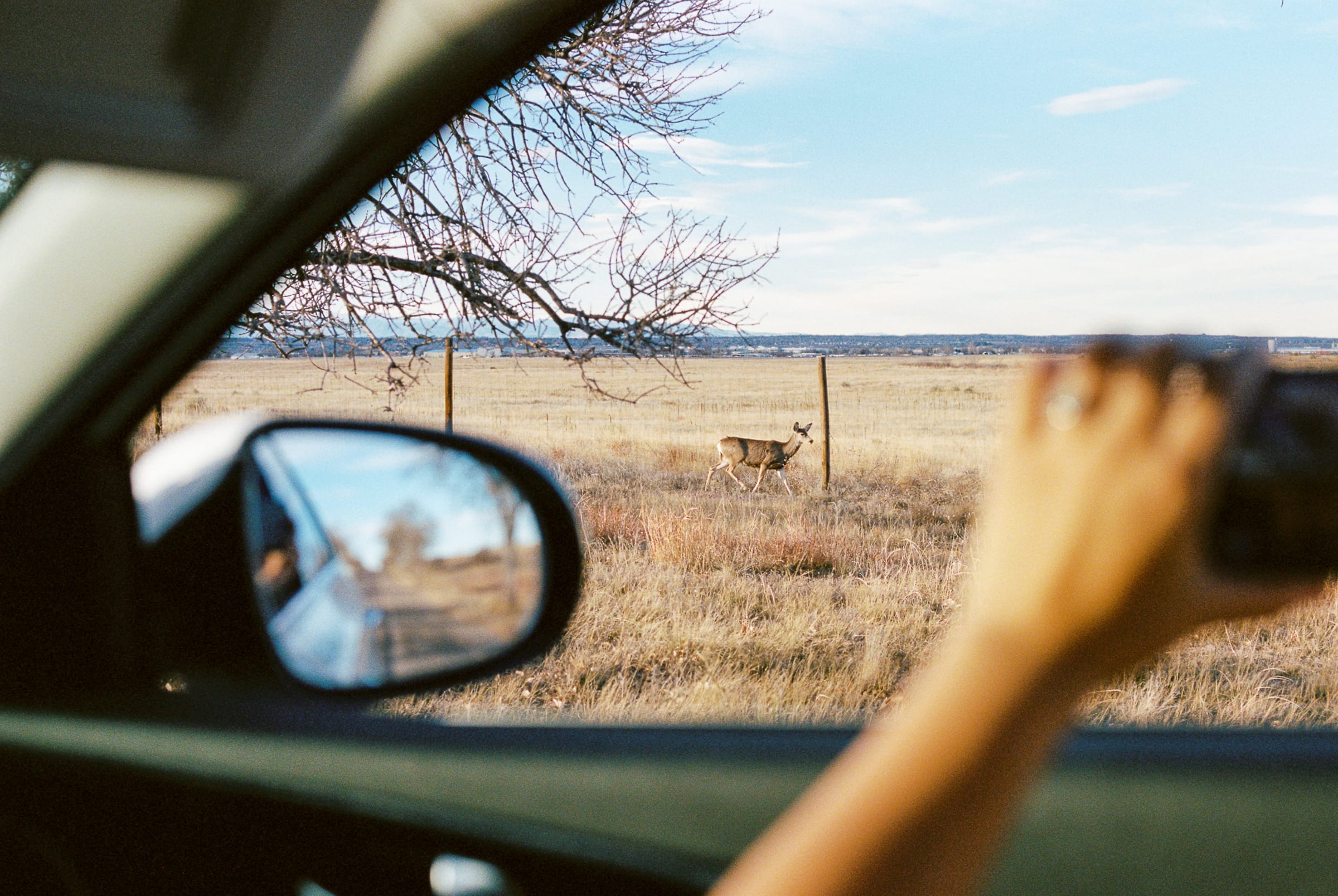 Denver wild life refugee