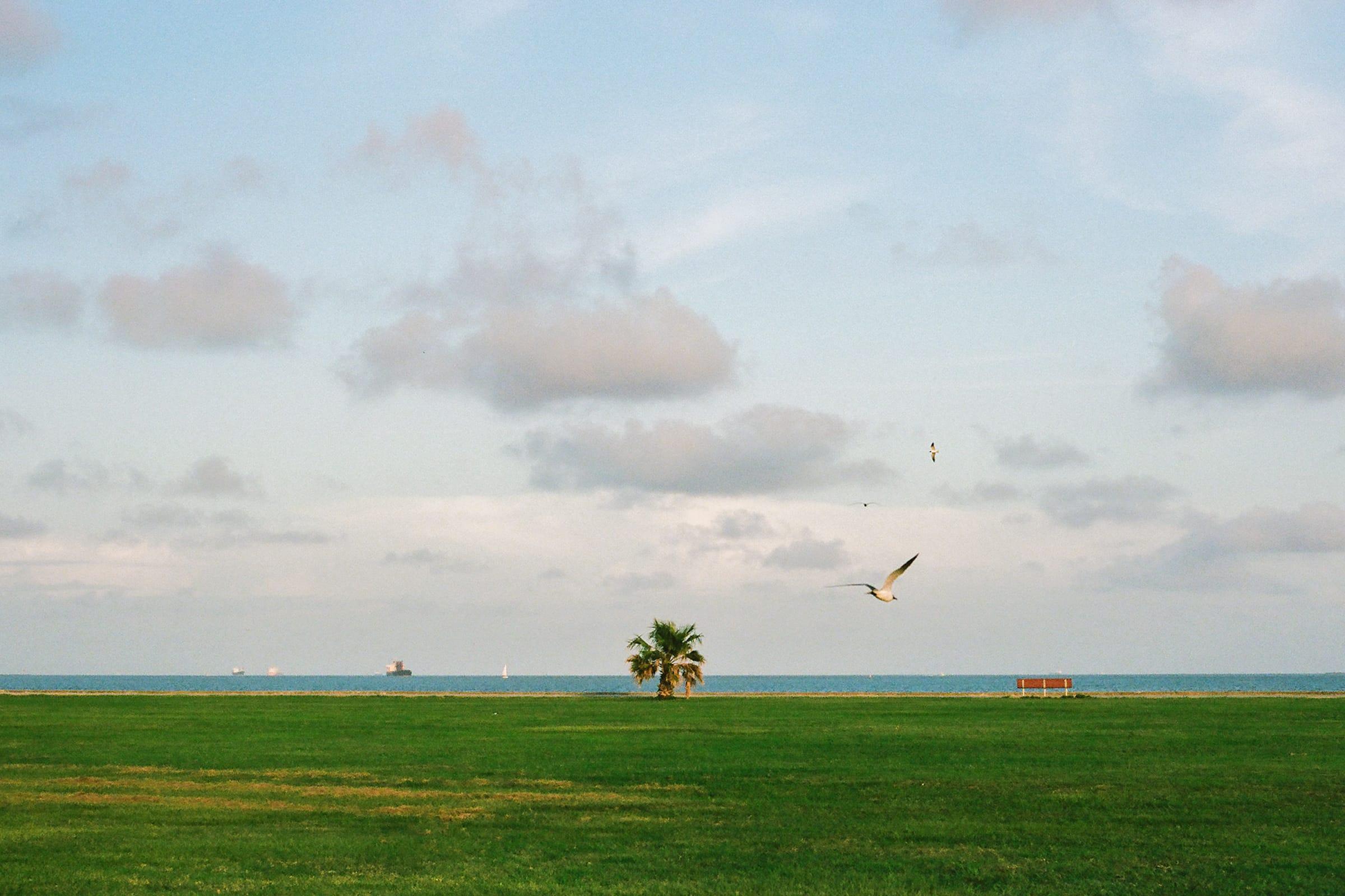 Park, Galveston #2