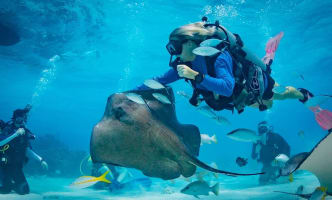Dive with the Stingrays