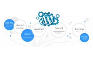 Portfolio for CMS / WordPress / Blog