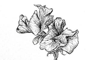 Portfolio for Drawing/Illustration