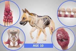 Portfolio for Veterinary Animation and Illustration