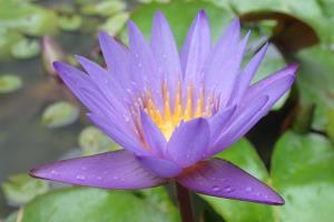 Portfolio for Yoga Writing: Philosophy to Regional
