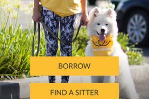 Portfolio for Pet app