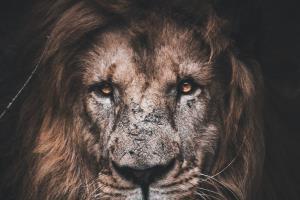Portfolio for Motivational/Self-development coach