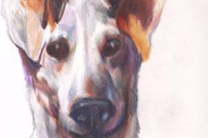 Portfolio for Pet Illustrations
