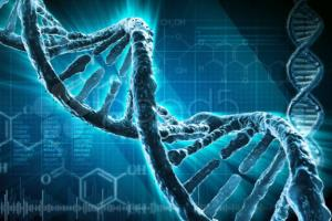 Portfolio for Bioiotechnology and genetic engineering