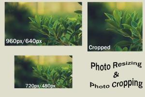 Portfolio for Image Resizing and Cropping