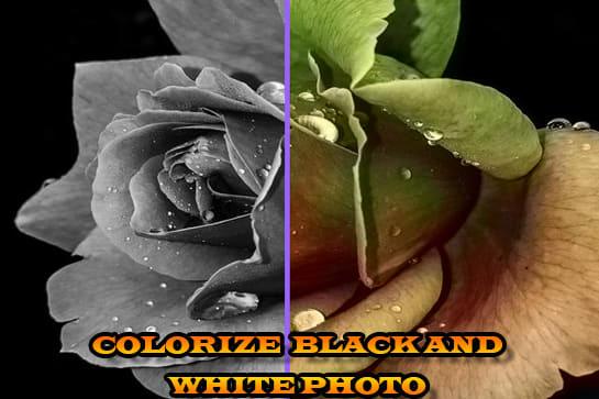 Portfolio for colorize black  and white  photo