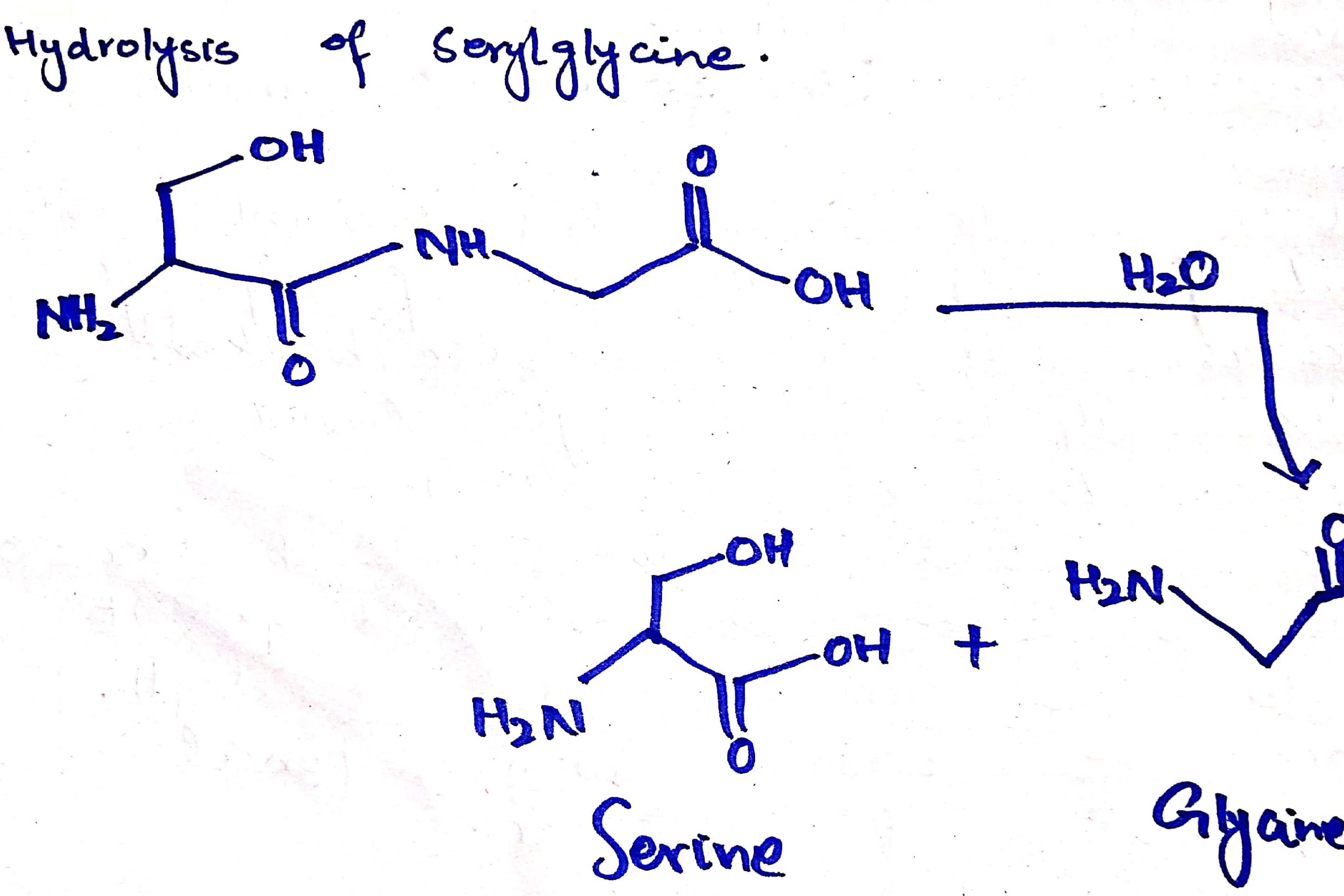 Portfolio for Chemistry Tutor