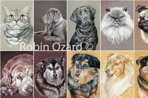 Portfolio for Animal Portraits