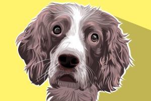 Portfolio for Pet Portrait Illustration