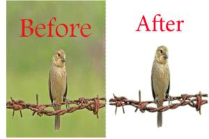 Portfolio for Adobe photoshop cs & Image Resizing
