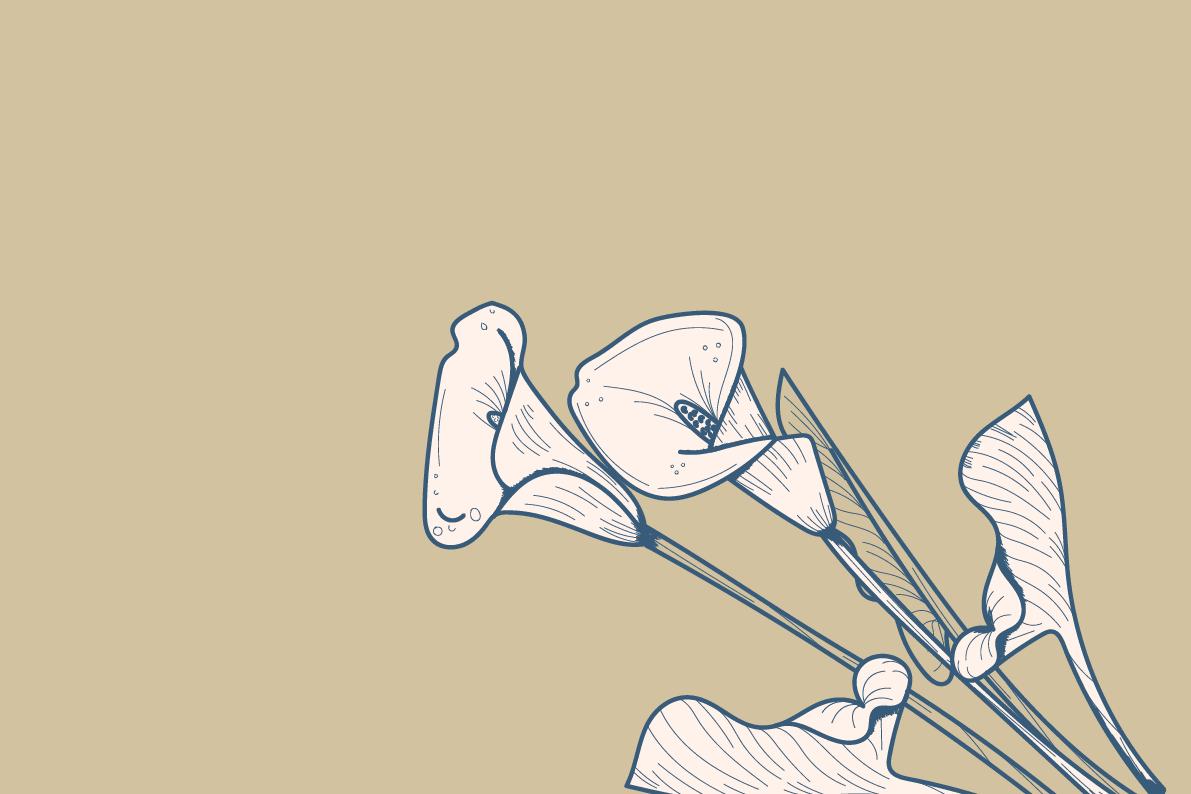 Portfolio for design